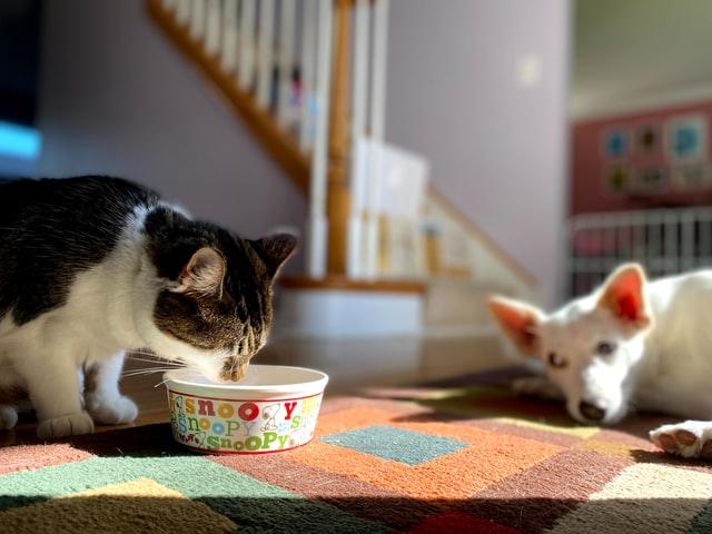 chat chien compagnie des animaux