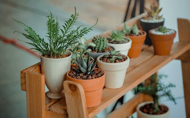 plantes pots