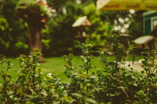 jardin d'une maison